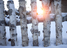 Sunshine and fence in snow Royalty Free Stock Image