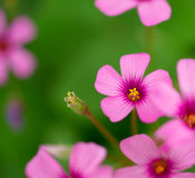 Sunshine flower Stock Images