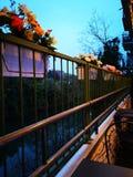 Sunshine flower Sky Blue stock images