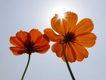 Ray of sunlight on flowers. Sunshine on flowers in early morning Royalty Free Stock Image