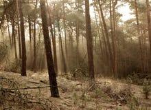 Sunshine forest Stock Photo