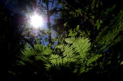 Sunshine in forest. Sun shines through dense forest Stock Photo