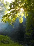Sunshine in a forest Stock Photos