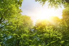 Sunshine in forest stock photography