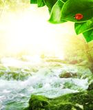 Sunshine in forest Royalty Free Stock Photos