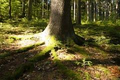 Sunshine on forest floor Stock Photos