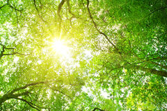 Sunshine in the forest. Royalty Free Stock Photos