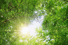 Sunshine in the forest. Stock Photos