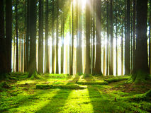 Sunshine in the forest. Stock Photo