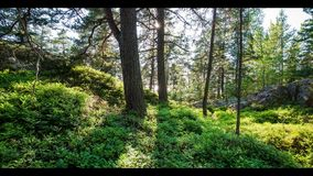 Sunshine in the forest stock footage