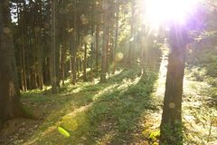 Sunshine in forest Stock Image
