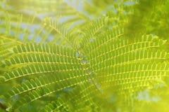 Sunshine on fresh green plant leaves closeup. Sunshine on fresh green plant leaves macro Stock Photos