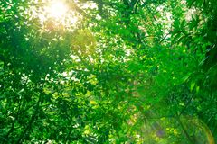 Sunshine in the garden Stock Photo