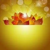 Sunshine Golden Background Royalty Free Stock Photo