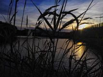 Sunshine through grass. Photo shows sunset through the grass Stock Photography