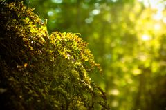 Sunshine grass in the summer forest Royalty Free Stock Photography