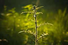 Sunshine grass in the summer forest stock photography