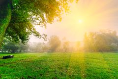 Sunshine on grass Royalty Free Stock Images