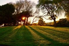 Sunshine on grassland Royalty Free Stock Photos
