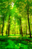 Sunshine and green forest Royalty Free Stock Photo