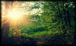 Sunshine in the green forest stock photos
