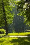Sunshine in a green park. Juicy morning in the green park royalty free stock images