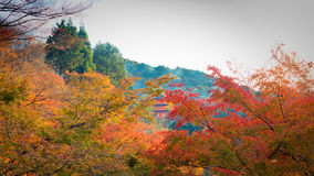 Sunshine on the green and red color change leave with soft focus Stock Image
