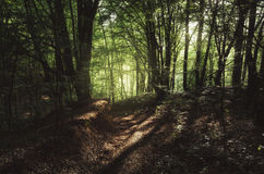 Sunshine in green summer forest Stock Photos