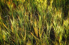 Short, tufted green grass in the sunshine stock images