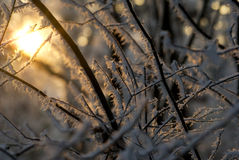 Sunshine on ice. Sun shining through winter icy branches stock photo