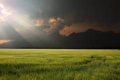 Sunshine landscape Stock Photos