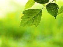 Sunshine leaf Stock Photos