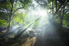 Sunshine from the leaf Royalty Free Stock Photography