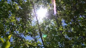 Sunshine through leaves, spring stock video footage
