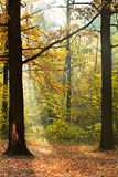 Sunshine lit glade in autumn forest Royalty Free Stock Photos