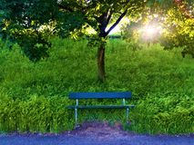 Sunshine loneliness, tree, peace and bench. Sunshine loneliness, tree, ray of light, grass, bench, peaceful and relaxing place, nature, enchanting atmosphere stock image