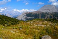 Sunshine Meadows, Banf National park Stock Image