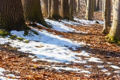 Snowmelt Stock Photos