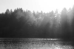 Sunshine through mist and trees stock image