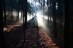 Sunshine. In a mixed forest, morning sunrise in the forest Stock Photos