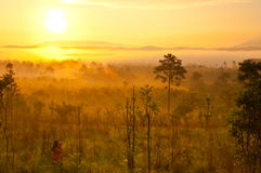 Sunshine on the morning mist Royalty Free Stock Photos