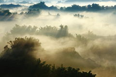 Sunshine on the morning mist with bamboo and hill Stock Photography