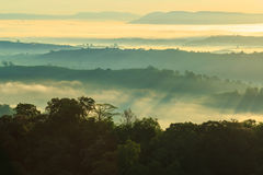Sunshine on the morning mist with tree and hill Royalty Free Stock Image