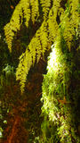 sunshine on moss and lichen Royalty Free Stock Photo