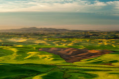Sunshine over crop fields in Palouse hills Royalty Free Stock Image