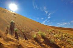 Sunshine over the dunes Stock Image