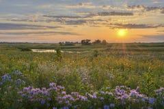 Sunshine over the flower field Stock Photo