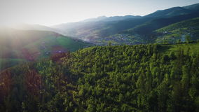 Sunshine over green forest stock video footage