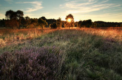 Sunshine over marsh with flowering heather Stock Photos
