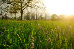 Sunshine over meadow Stock Images